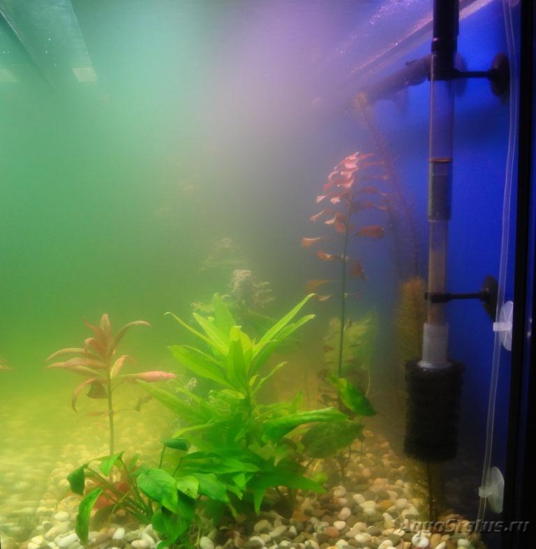 Почему зеленеет вода в аквариуме и что с этим делать, как бороться народными методами, а также, какие средства профилактики существуют