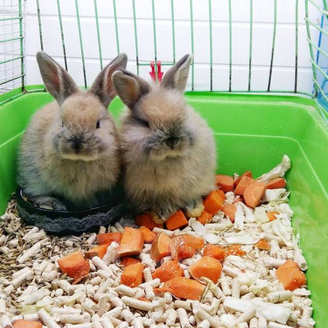 Питомники декоративных кроликов (в москве, спб и других городах)
