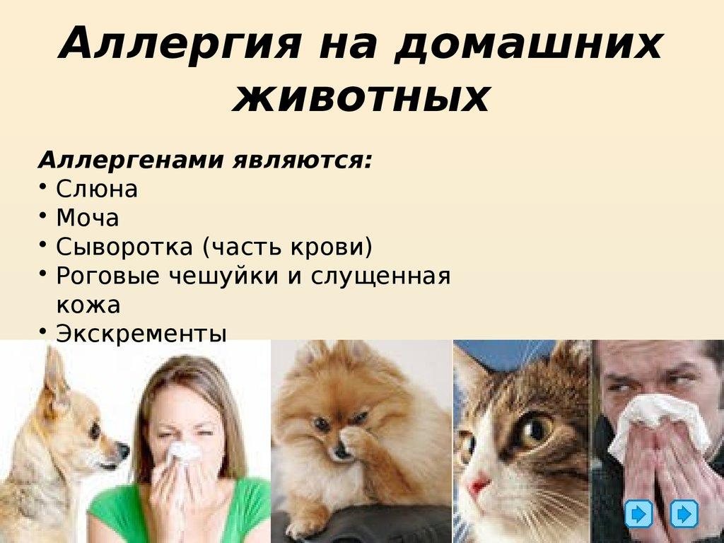 Аллергия на кошек. симптомы, причины и лечение аллергии на кошек у детей