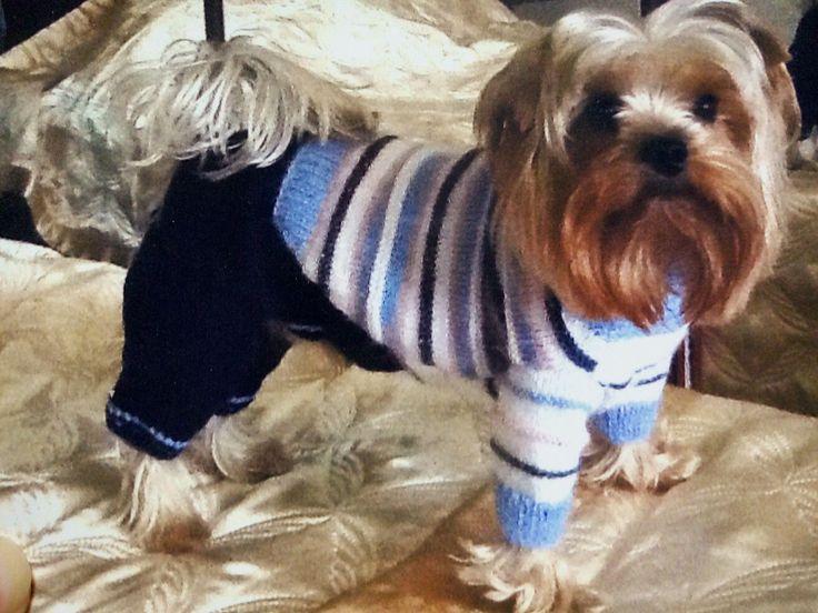 Вязание для собак: наряжаем, согреваем, утепляем