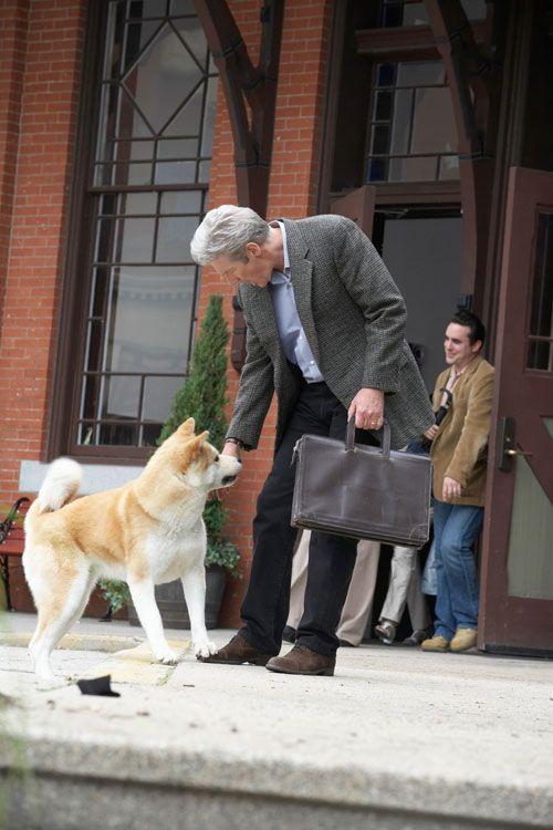 Порода собаки хатико – как выглядит собака, основные окрасы, рекомендации по уходу и содержанию