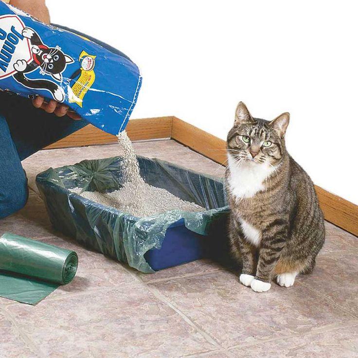 10 советов, как охладить кошку в жару