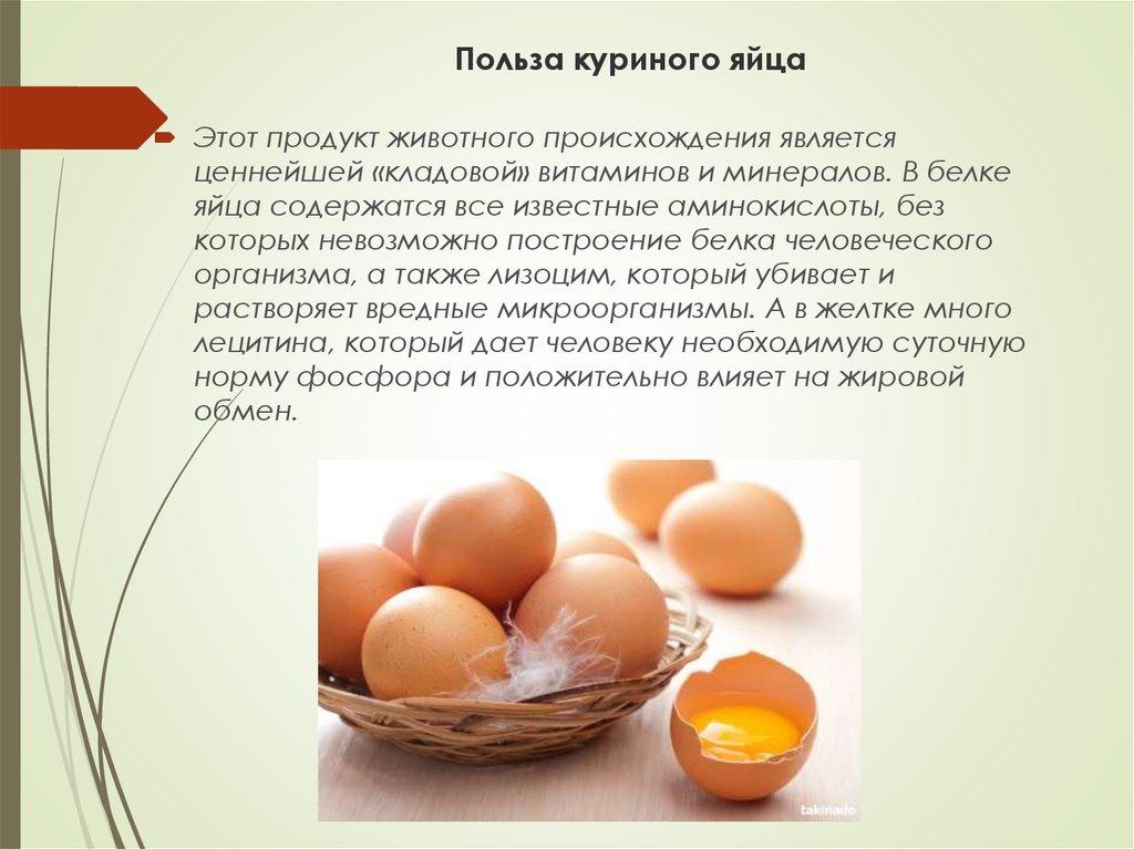 Можно ли собакам давать яйца: в сыром и вареном виде, куриные и перепелиные