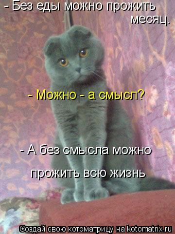 Сколько времени кошка может не пить - что делать