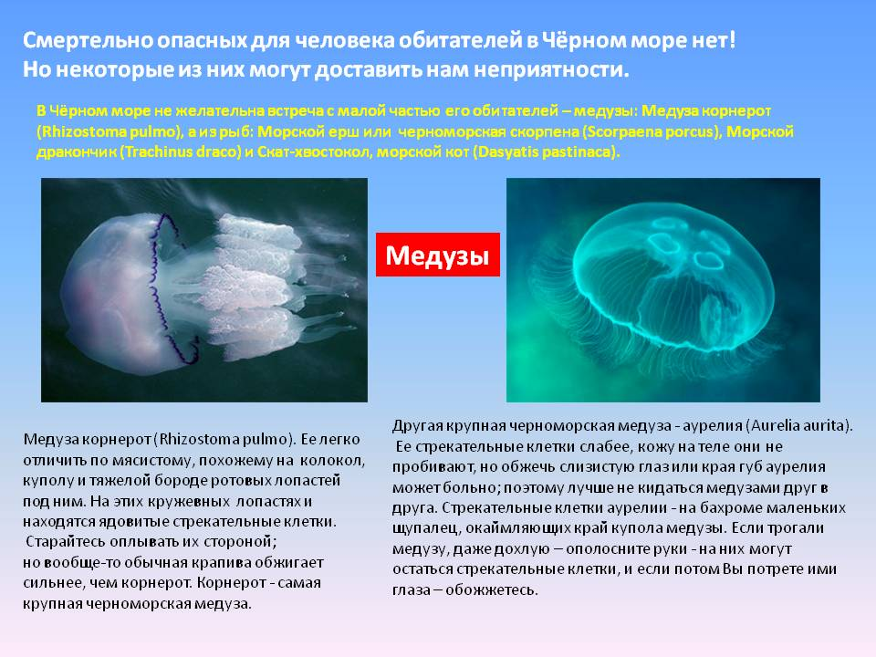 Медузы в крыму: основные виды черноморских медуз и когда они появляются в море