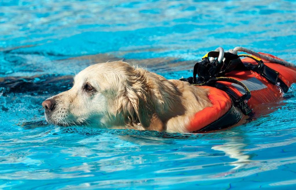 Породы собак-спасателей