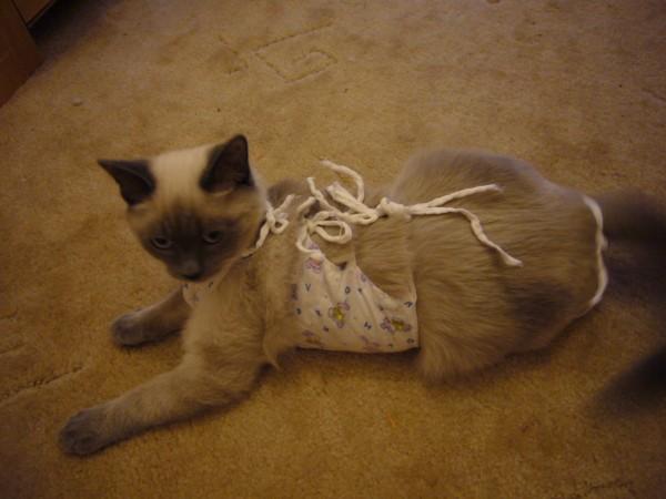Когда можно снять попону кошке после стерилизации: сроки, правила послеоперационного ухода, рекомендации