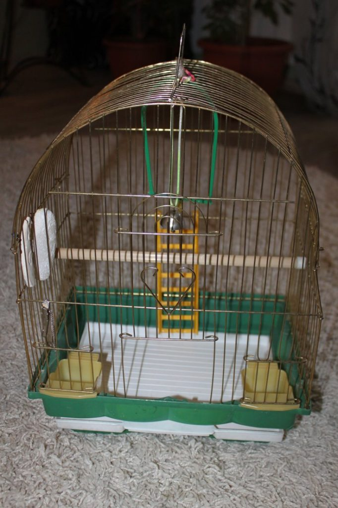 Клетки для волнистых попугаев: выбор, обустройство, установка и уход