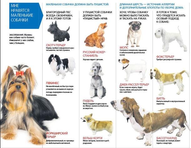 11 пород собак, у которых выпадают глаза