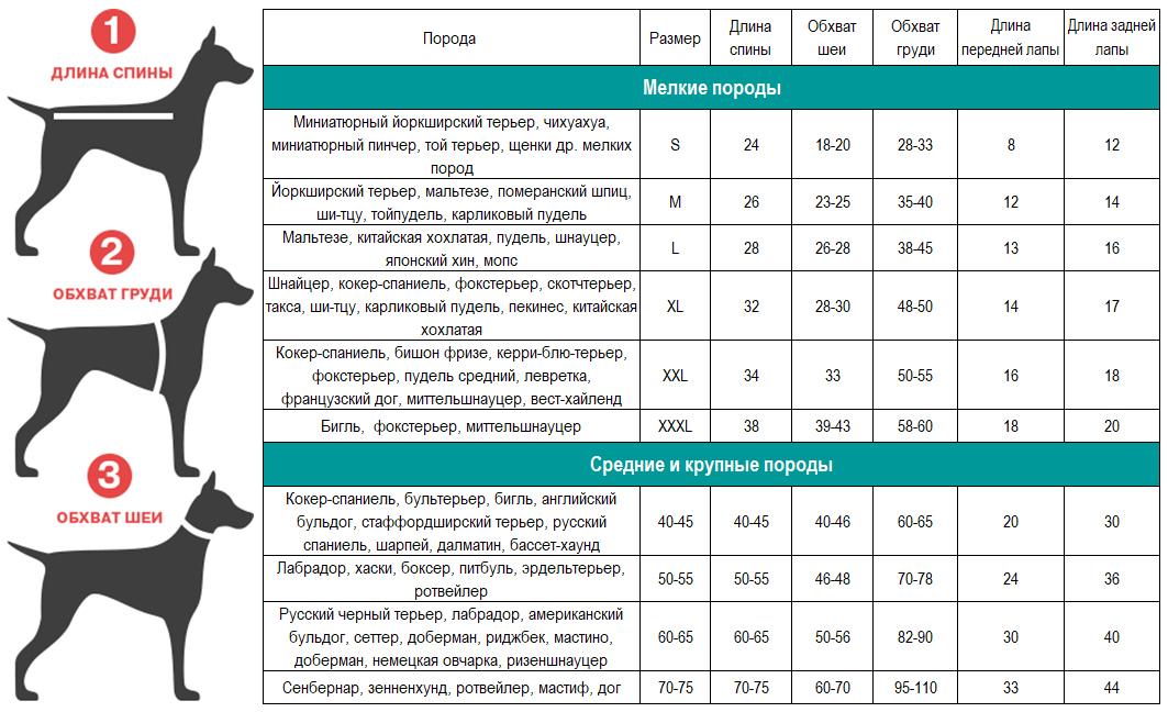 Вес немецкой овчарки: нормы по месяцам, сколько весит во взрослом возрасте