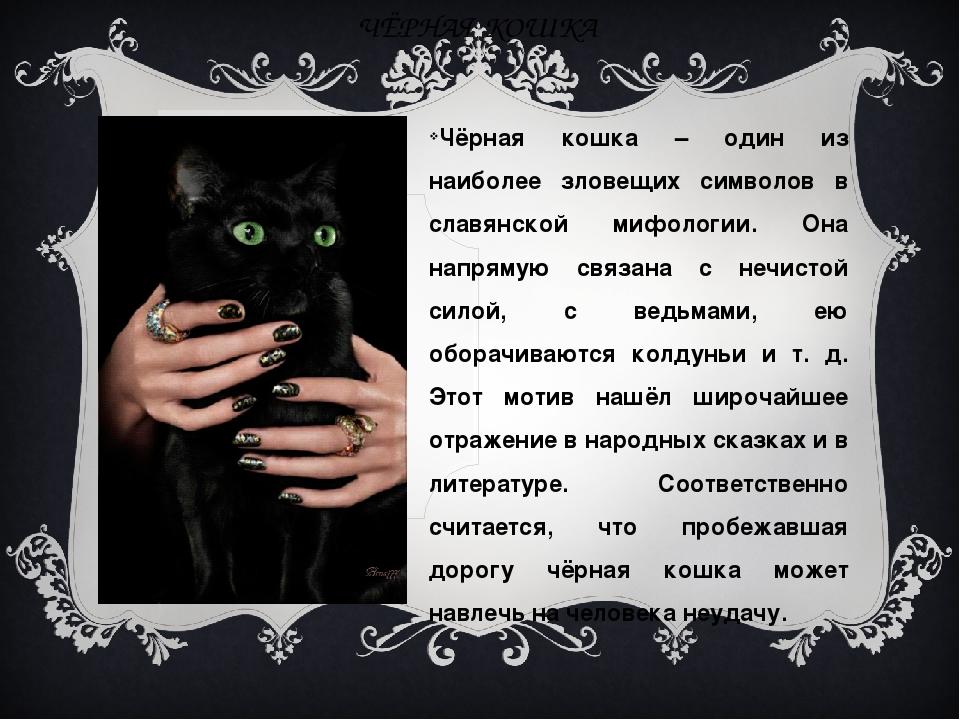 Что говорят приметы, если чужая кошка пришла в дом