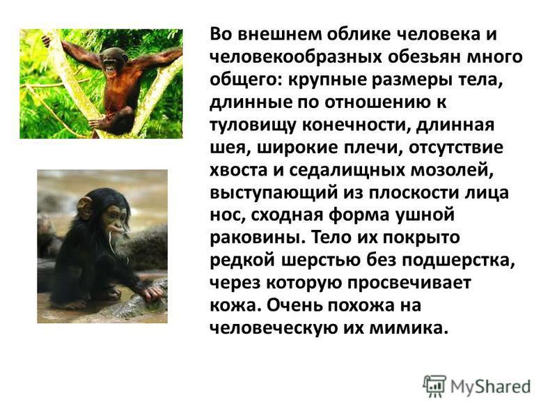 Обезьяны: виды и фото