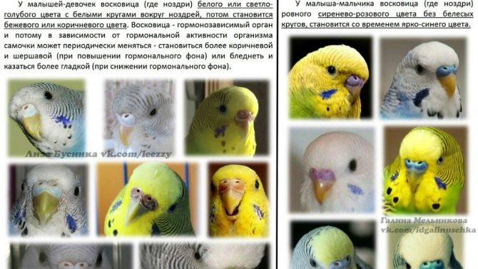 """Как выбрать попугая?   блог ветклиники """"беланта"""""""