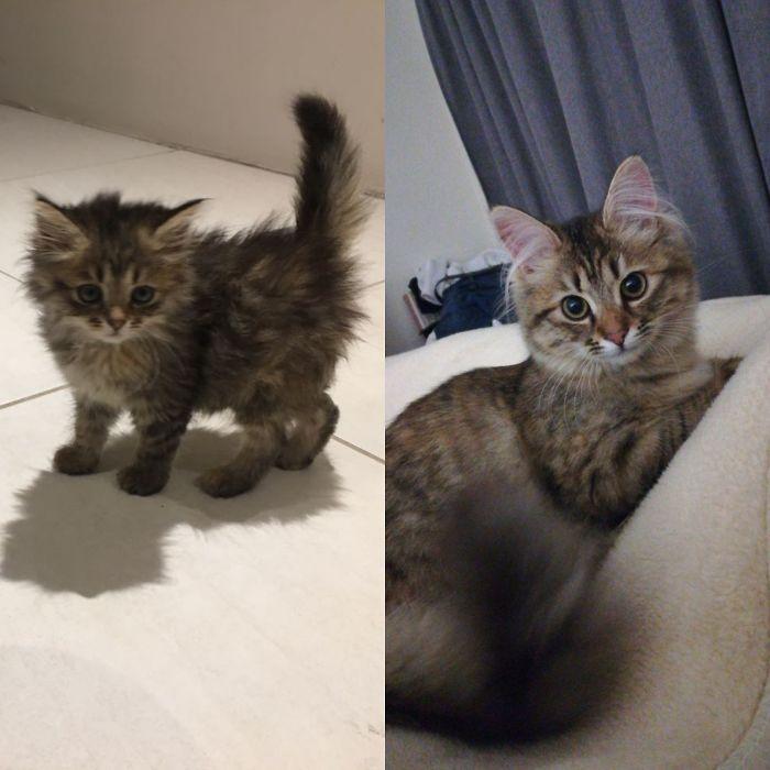 Этапы развития котят с момента рождения до трех месяцев на petstory