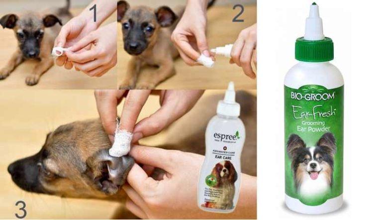 Уход за ушами собаки: как часто чистить в домашних условиях, а также лосьон, капли, салфетки и другие средства и жидкости для этого
