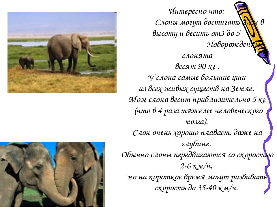 Интересные факты о слонах :: инфониак