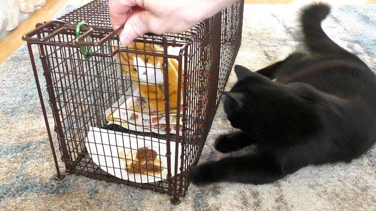 Как поймать кота — ловушки, механические приспособления