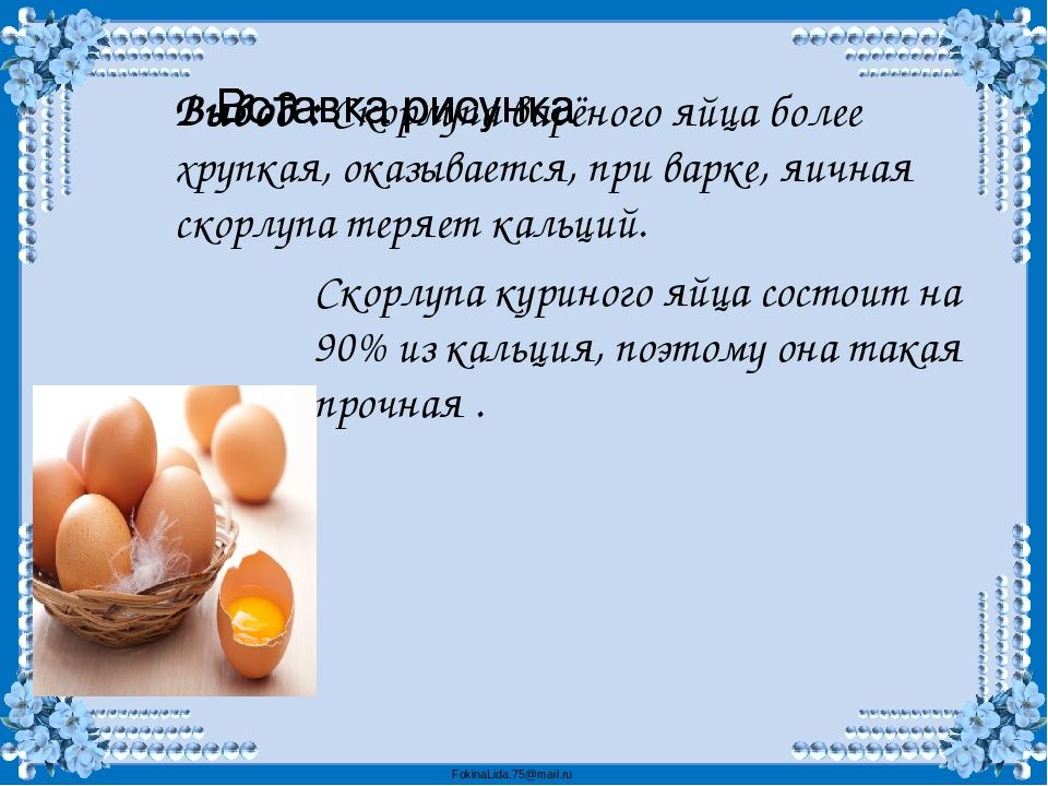 Можно ли собаке давать яйца? – некоторые правдивые мифы - kupipet.ru