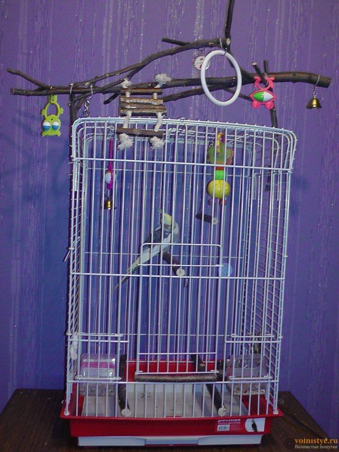 Клетка для волнистого попугая: выбор, размер, как сделать своими руками