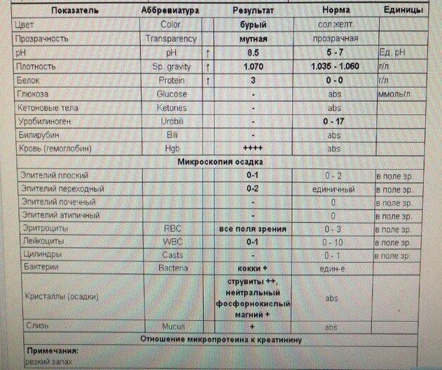 Анализ мочи ветеринарный, ветеринарная клиника, днепр