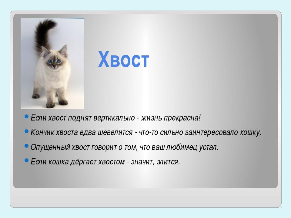 7 причин, почему кошка виляет хвостом - объяснение поведения