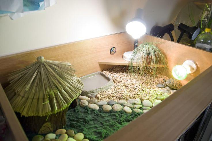 Террариум для сухопутной черепахи своими руками – пошаговая инструкция