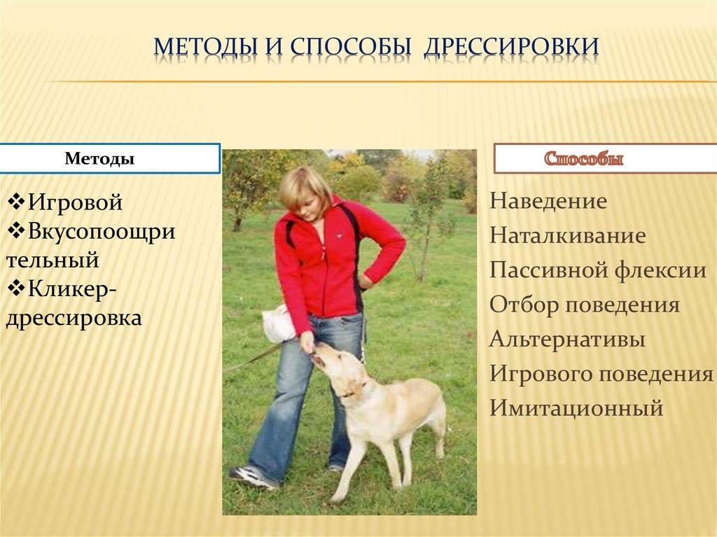 Дрессировка взрослой собаки с нуля и обучение командам