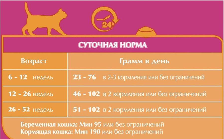 Кошачий корм пурина – питание для качественной жизни
