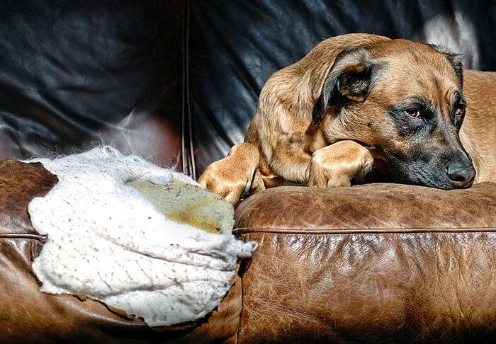 Почему собаки валяются в тухлятине: причины, предположения, факты