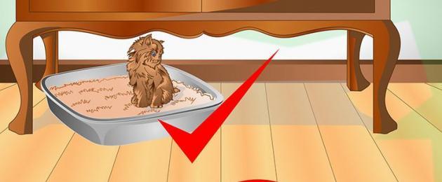Как отучить кошку гадить в неположенном месте: причины проблемы и проверенные методы решения