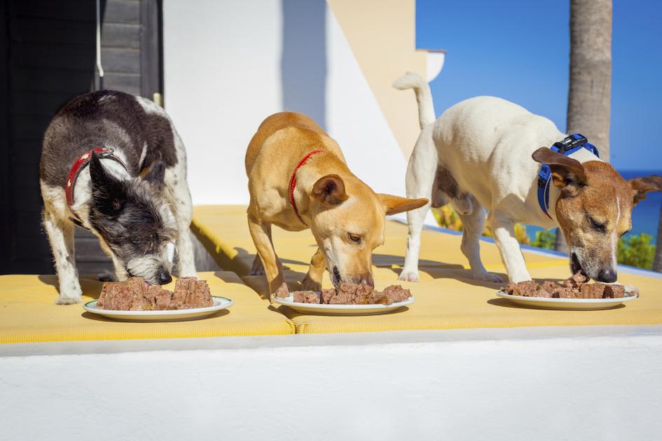 Можно ли кошкам давать макароны: польза и вред, в каком виде давать и сколько
