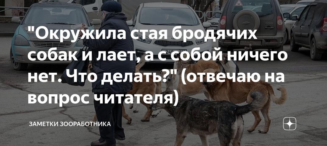 Куда можно обратиться по поводу отлова бродячих собак? — жкхакер