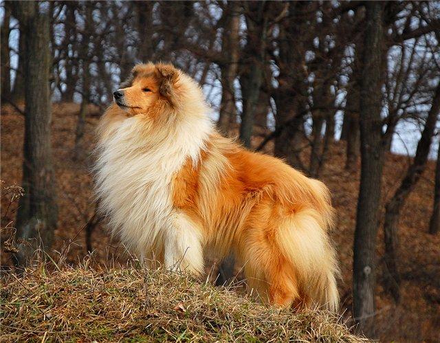 Маленькие породы собак: список представителей с фото