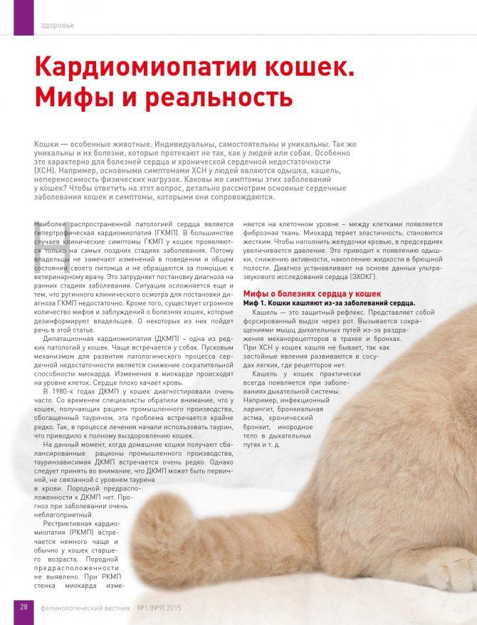 Самые частые кошачьи заболевания: причины и симптомы   ветмед