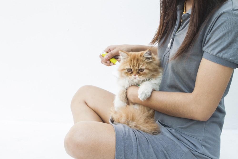 Как проявляется аллергия на кошек? как ее лечить?