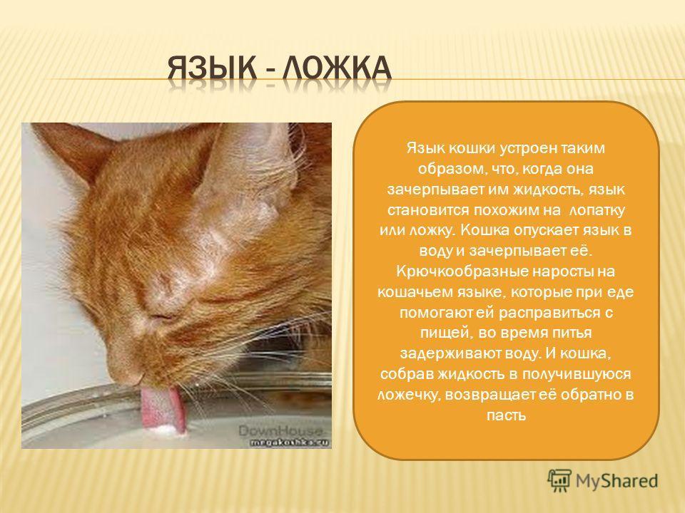 Кошка управляет своим хвостом или нет