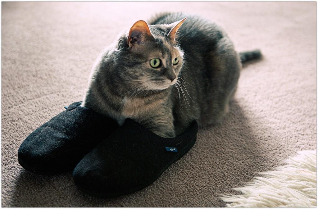 Когда кот принес тапки