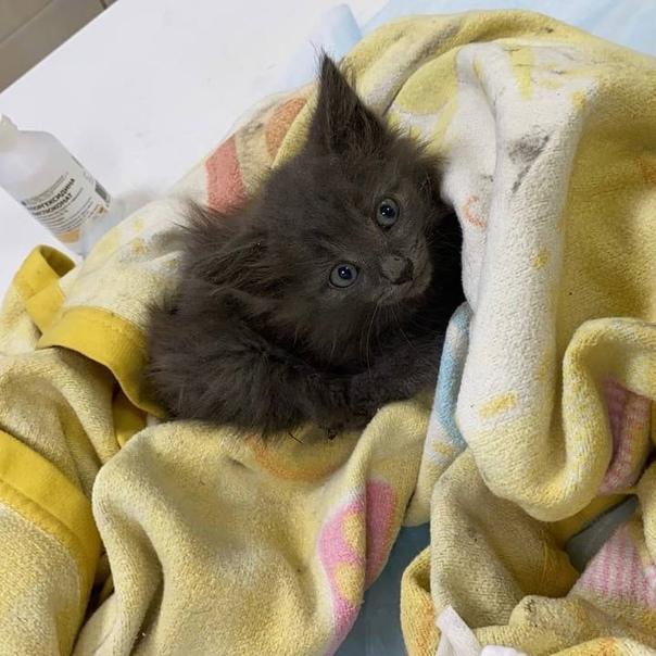 Как приучить котенка в 1,5 месяца к лотку в квартире легко и быстро: советы ветеринара, как приучить уличного кота к лотку | жл
