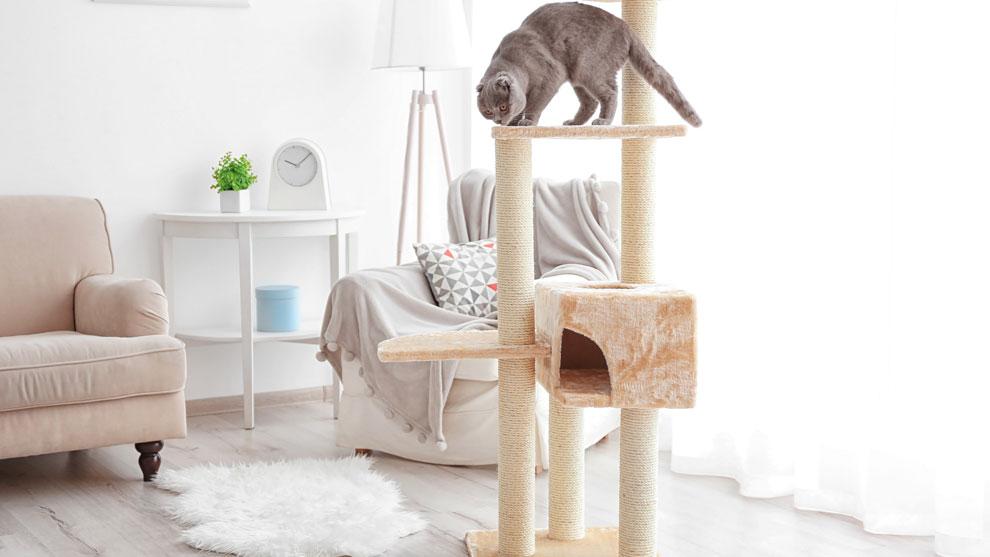 Лучшие игрушки для кошек от простейших поделок до интерактивных комплексов
