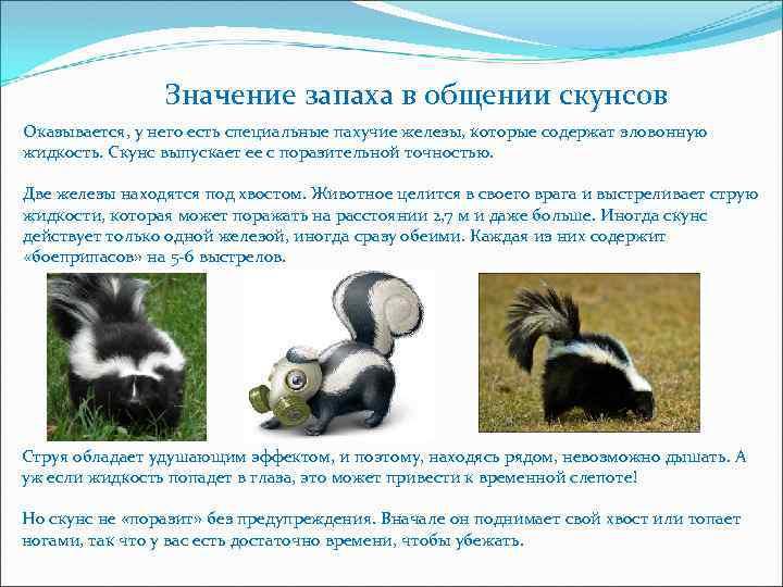 Животные звери семейства куньих: фото и названия