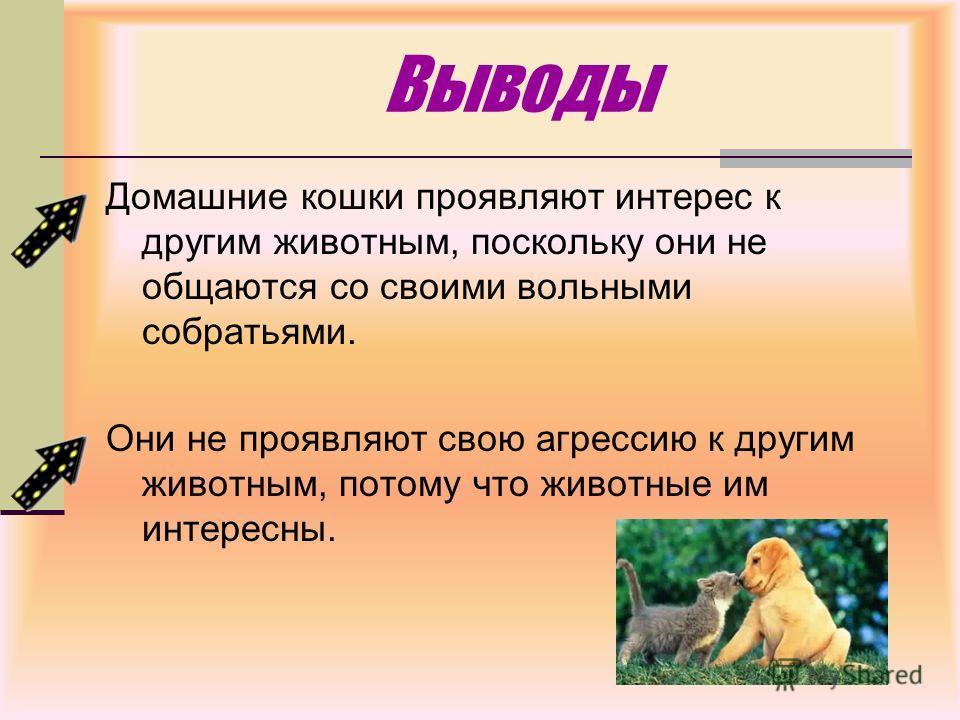 Если кошка укусила, что делать: причины и виды агрессии