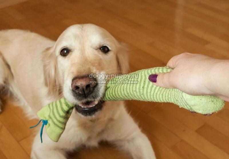 Как отучить щенка кусаться