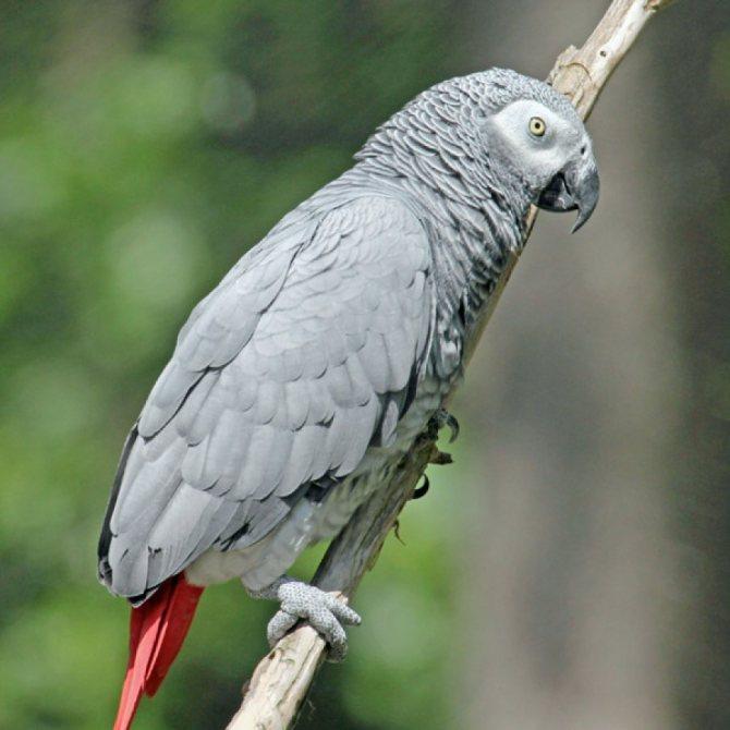 Виды попугаев: описания, названия, интересные факты, фото, содержание и уход в домашних условиях