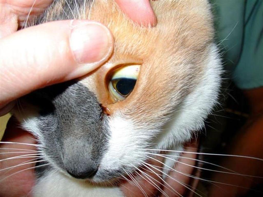 Лечение хпн у кошек и собак - научная статья центра ответ