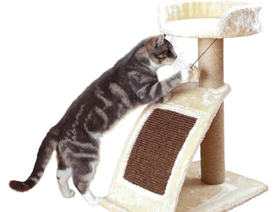 Как отучить кошку драть обои и мебель: советы и рекомендации