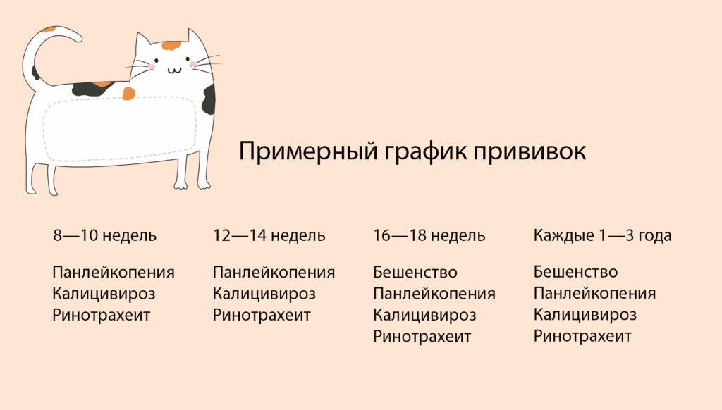Обязательные и рекомендуемые прививки, какие делают кошкам