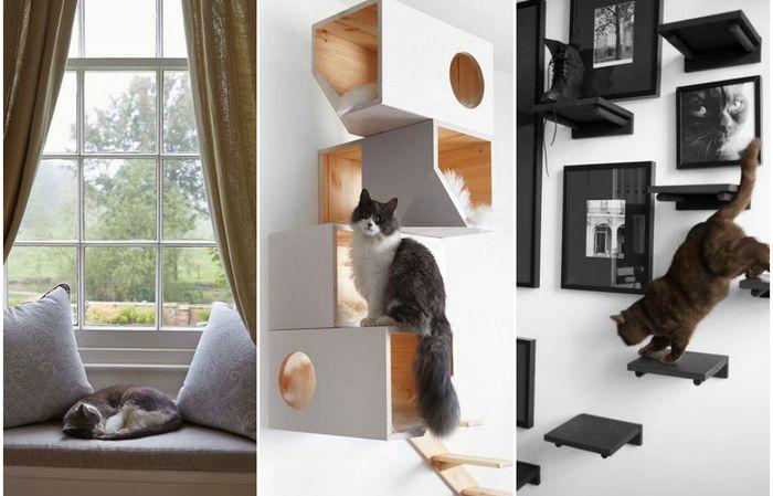 Вы решили завести кошку: как подготовиться к ее появлению в доме