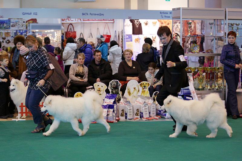 Выставка собак в москве: расписание на 2021 год
