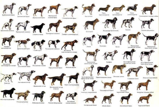 У каких собак и почему выпадают глаза