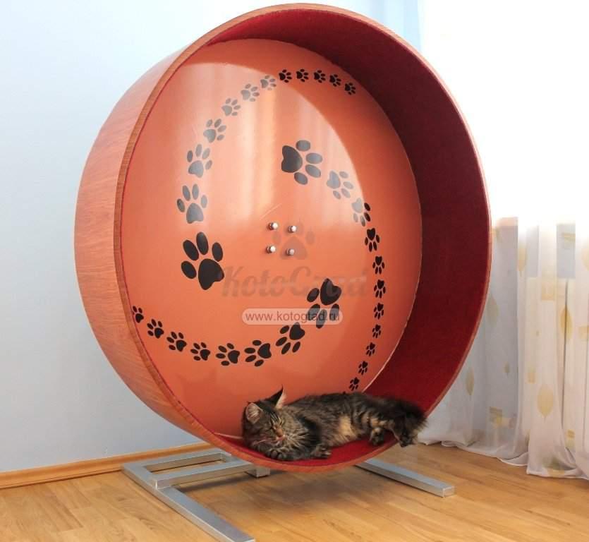 Беговое колесо для кошек: как выбрать тренажер для кота? пошаговая инструкция изготовления своими руками